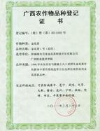金花茶1号(花用)农作物品种登记证书